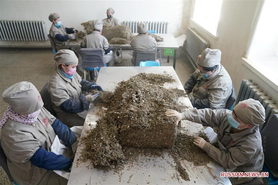 Производство лекарств традиционной китайской медицины