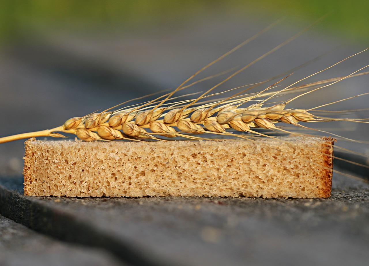 Борьба с недоеданием — выводятся новые сорта пшеницы, обогащенные цинком